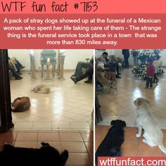 Stray dogs show up to a funeral of a woman that cared of them - WTF Fun Fact
