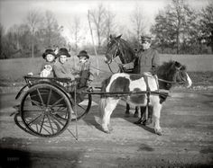 pony and carriage 1917 Vintage Photographs, Vintage Images, Shorpy Historical Photos, Pony Rides, Horse Drawn, High Resolution Photos, Photo Archive, Old Photos, Animals And Pets