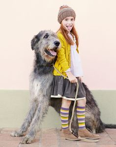 We have a Scottish Deerhound!  Also- cute Autumn look on this girl.