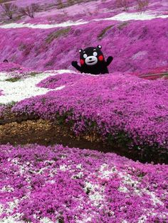"Kumamon - Insert the Violente Femmes song ""I'm Free! Such Wow, Tru Love, Puppies And Kitties, All The Things Meme, Happy Together, World Photography, Reaction Pictures, Japanese Art, Funny Cute"