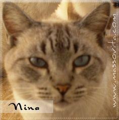 Masso Vita: Saudades de Nina