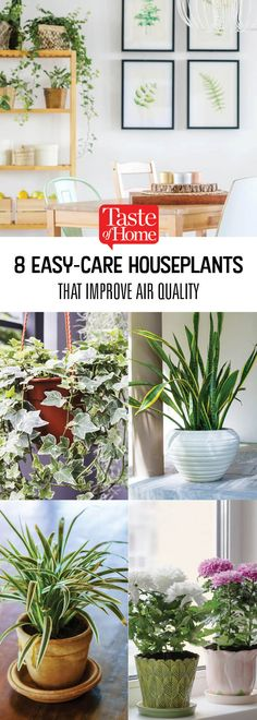 8 Easy-Care Plants That Improve Your Home's Air Quality Tall Indoor Plants, All Plants, Types Of Plants, House Plants, Easy Care Houseplants, Easy Care Plants, Plant Care, Herb Garden, Vegetable Garden