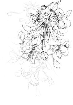 ideas for fashion black and white illustration ink Pencil Drawings Of Flowers, Flower Sketches, Art Sketches, Drawing Flowers, Art Floral, Floral Drawing, Floral Illustrations, Illustration Art, Fleurs Art Nouveau