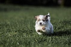 I'm coming, i'm coming. Puppies, Dogs, Animals, Animales, Puppys, Animaux, Pet Dogs, Doggies, Pup