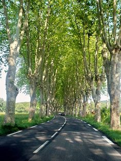 Country Provence roads in France, with a French Bulldog, a #glutenfree baguette and perhaps a cute Frenchman? My idea of #ridecolorfully