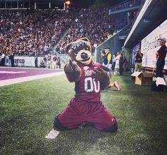 Monte is always posing for the camera #Monte #GoGriz