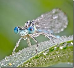 cool photography amazing beautiful close up insects photos