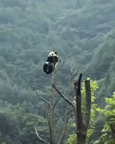 Las 20 mejores imágenes de Os panda | Artesanías chinas