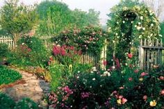 Antique Rose Emporium in Brenham, Texas ~  Ordered roses online from them 10 years ago and they're still thriving.