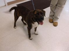 IMOGENE---Boxer Mix • Adult • Female • Large Pickaway County Dog Shelter Circleville, OH. Pickaway County Dog Shelter fee $55.00, includes current license & a free vet exam given by participating vets. Hours of operation for adoption are Monday through Friday 10:00 am to 4:30 pm. Saturday from 9:00 am to 3:30. If you have any questions regarding our adoptable dogs please feel free to contact our Dog Wardens at 740-474-3741.