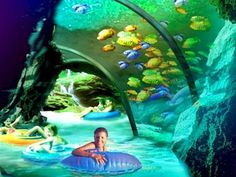 Aquatica has a lazy river that runs through an aquarium. I can only imagine how beautiful this would be!