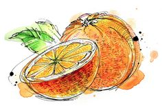 Raw Ingredients by Abby Diamond, via Behance Watercolor Fruit, Fruit Painting, Watercolor Sketch, Watercolor And Ink, Watercolor Paintings, Watercolours, Watercolor Projects, Watercolor Ideas, Art Sketches