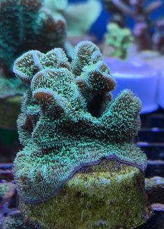 Colorful Fish, Tropical Fish, Coral Frags, Coral Reefs, Freshwater Aquarium, Aquarium Fish, African Cichlids, Whale Sharks, Whales