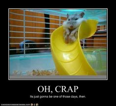 Kinda reminds me of when my hammy got stuck in his tube!