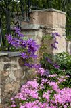 What's in Bloom - May 30, 2014