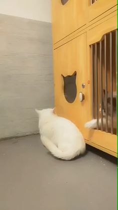 There's No Escape 😼🙀 Source by inspiringdad videos wallpaper cat cat memes cat videos cat memes cat quotes cats cats pictures cats videos Funny Animal Memes, Funny Cat Videos, Cute Funny Animals, Funny Animal Pictures, Cute Baby Animals, Funny Cute, Animals And Pets, Funny Gifs, Cute Cat Gif