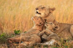 7 Simple Tips for Safely Taking Beautiful Wildlife Photos