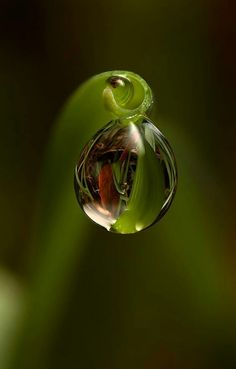 Water droplet with olive green in nature