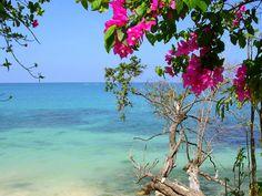 #caribbean #sea #beach #flora