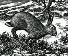 Artists/Howard Phipps  Ambling Hare    Wood engraving