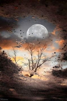 FULL MOON Sunrise Reflection Photography on CANVAS Wall Art Canvas is Stretched, Signed and Ready to Hang - Title: Malte PFÜTZE from 2011 *** Watermarks are not visible on the result image Surreal eye catch - Stars And Moon, Stars Night, Moon Pictures, Pretty Pictures, Amazing Pictures, Moon Pics, Beautiful Moon, Beautiful World, Beautiful Images