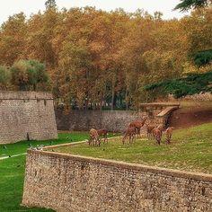 Pamplona, Htm, 1950s, Places To Visit, Castle, Instagram, Plants, Design, Beautiful Places