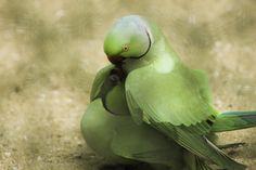 Kiss of Love by Nishad Shamnadh on 500px