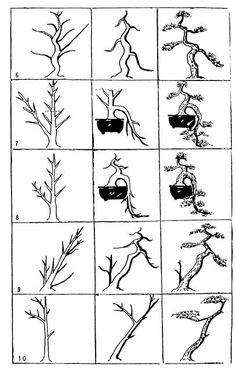 24 best bonsai images on pinterest bonsai trees bonsai garden and rh pinterest com Bonsai Wiring Tips Bonsai Wire Sizes