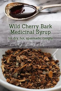 Wild cherry bark's antitussive qualities make it an exceptional herb to use in respiratory formulations with appropriate safety & herbal considerations. This fruity wild cherry bark syrup delivers sweet medicinal benefits and will help to soothe a hacking, spasmodic, barking cough. #wildcherrybark #coughsyrup #homemadecoughsyrup #cough #herbs #herbalism #herbalmedicine Cold Home Remedies, Natural Health Remedies, Herbal Remedies, Sleep Remedies, Natural Cures, Natural Beauty, Healing Herbs, Medicinal Herbs, Natural Healing
