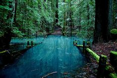 Turquoise Pond, Redwood Forest, California