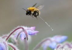 Bee Having A Wee Pho