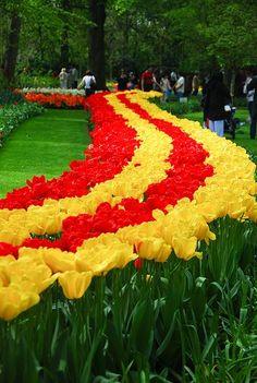 Flower Fieldsεїз