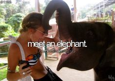 done: meet an elephant (and by the way i rode an elephant when i was a kid but i wanna meet again)