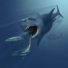 """The next lesson in our """"Prehistoric Predators"""" Unit will be about the terror of the sea, the Megalodon. The kids are very excited!"""