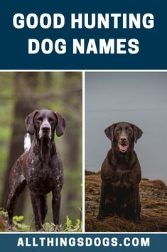 It might be a good idea to have your dog's name reflect various aspects of hunting – like 'Bullet' or 'Boomer' or something more traditional, like 'Winchester', bestowing steadfastness. No matter what breed you have, check ou tour list of some good hunting dog names, which will suit your hunting partner.  #huntingdognames #goodhuntingdognames #dognames Hunting Dog Names, Best Dog Names, Winchester, Your Dog, Labrador Retriever, Cute Animals, Tours, Bullet, Suit
