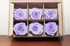 Resultado de imagen de rosas preservadas