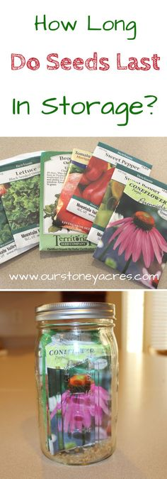 How long do seeds last in storage? You will be surprised by the answer to the question. Most seeds with just minimal care will last for 3 to 5 years in storage. You can greatly increase storage times by storing them properly. This post will give you a time line for how long each type of seed lasts in storage but before we talk about that lets take a minute to cover the ideal conditions for storing seeds.