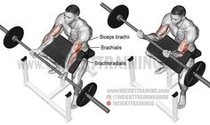 Isolation your elbow flexors, especially your brachialis and the long head of your biceps brachii, using the barbell preacher curl. Forearm Workout, Biceps Workout, Workout For Flat Stomach, Abs Workout For Women, Great Ab Workouts, Body Workouts, Preacher Curls, Back And Biceps, Fitness Exercises