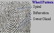 Fingerprint spiral - tribe.net :: fingerprint as logo, icon, watermark?