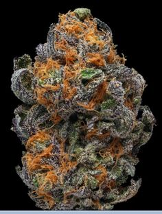 Granddaddy purp great strain http://www.spliffseeds.nl/silver-line/blue-berry-seeds.html