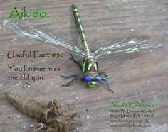 Aikido Fact #5: It's transforming.