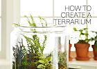 Terrariums: A Guide to Plants and Care