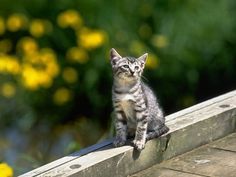 Cats - 133 Pictures
