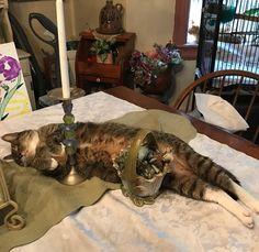 His favorite place to sleep. http://ift.tt/2zLaPN0
