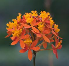 Orange flower. by dicktay2000