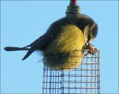 羽毛でまんまるになっているいろいろな鳥の写真26枚 - DNA