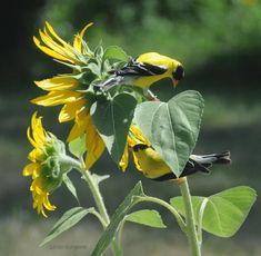 Ptaszki w kolorze kwiatów