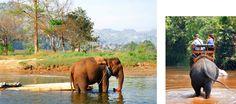 Por que NÃO andar de elefante na Tailândia (e onde vê-los de forma ética)