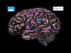 Die Hirnnervenkerne