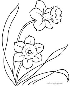 Spring coloring page - daffodils!  :)